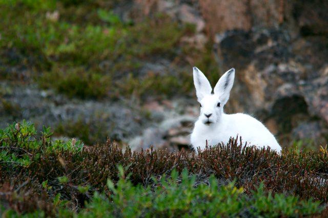 Rüyada tavşan görmek ne anlama gelir? Rüyada beyaz tavşan görmek, rüyada tavşan yakalamak, tavşan yavrusu görmek