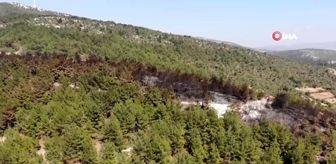 Orman İşletme Müdürlüğü: Son dakika haberleri! Ateş savaşçılarının çabası bir mahalleyi kül olmaktan kurtardı