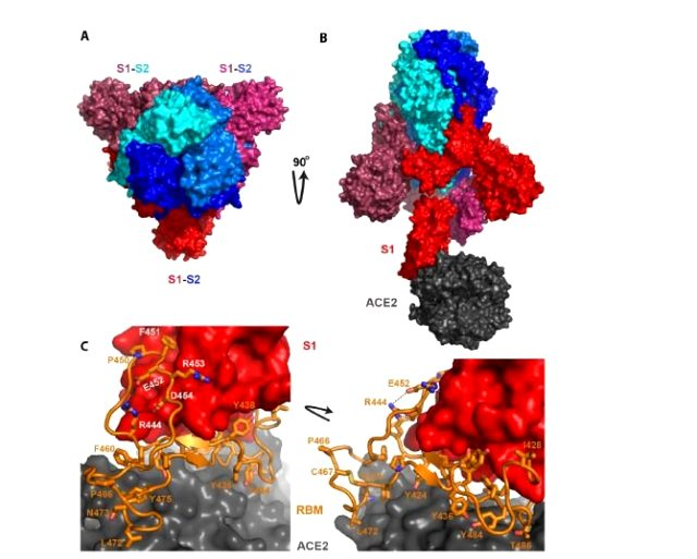 'Koronavirüs insan yapımı' diyen Çinli Virolog beklenen raporu yayınladı: Virüs laboratuvarda yapıldı