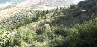 Kazım Özgan: Kayanın içinden çıkan kızılçam ağacı görenleri şaşkına çeviriyor