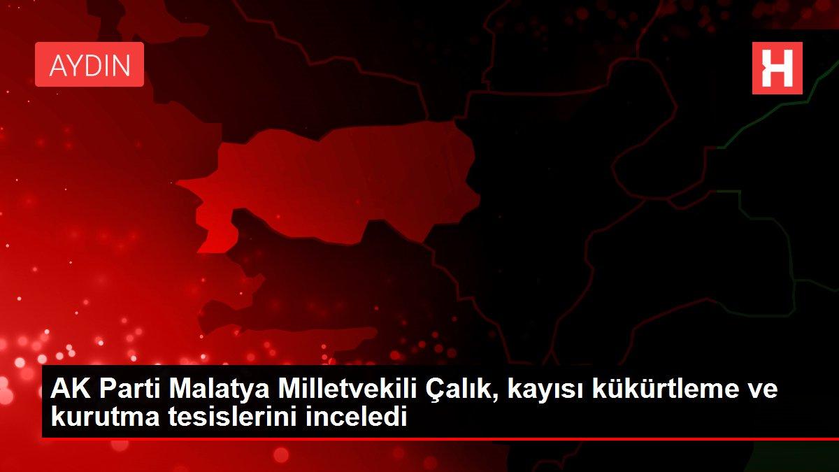 AK Parti Malatya Milletvekili Çalık, kayısı kükürtleme ve kurutma tesislerini inceledi