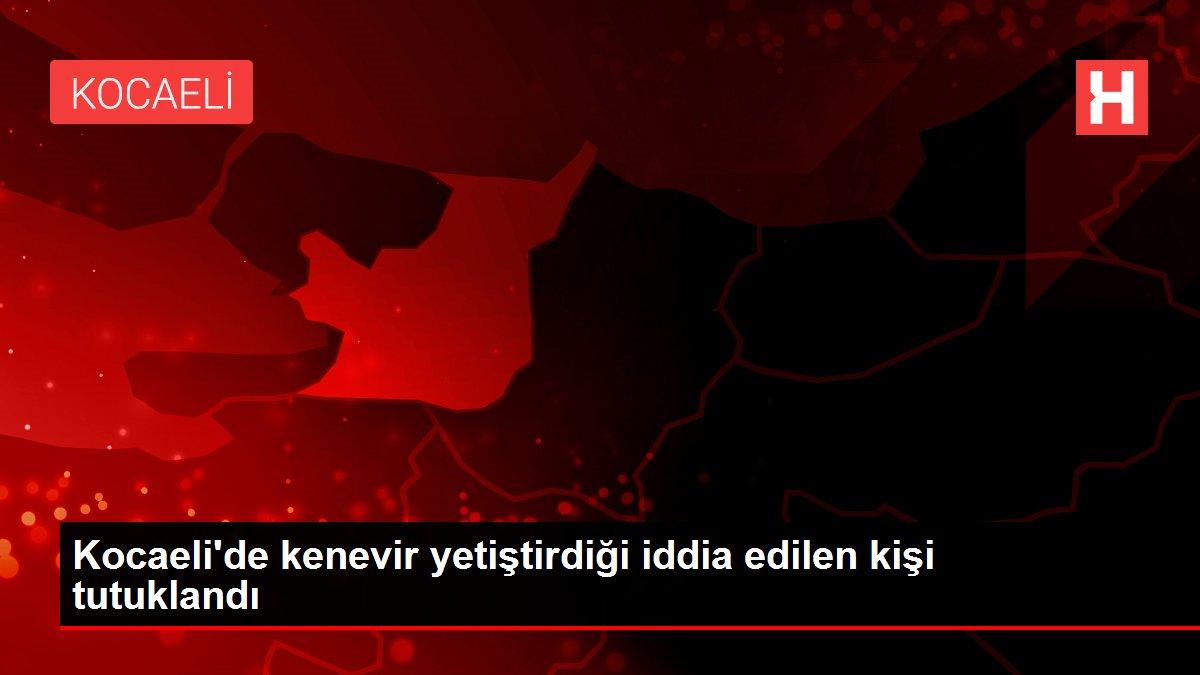 Kocaeli'de kenevir yetiştirdiği iddia edilen kişi tutuklandı