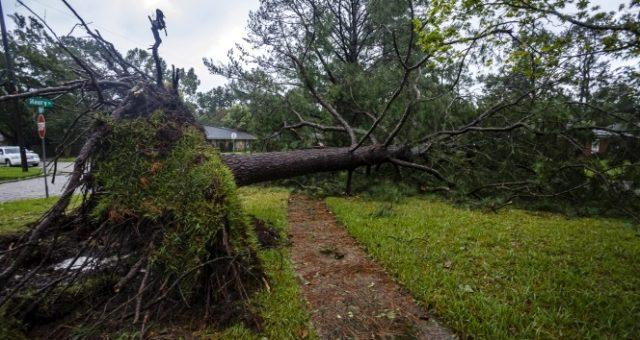 Sally Kasırgasının vurduğu Alabama'da dev timsahlar sokağa indi