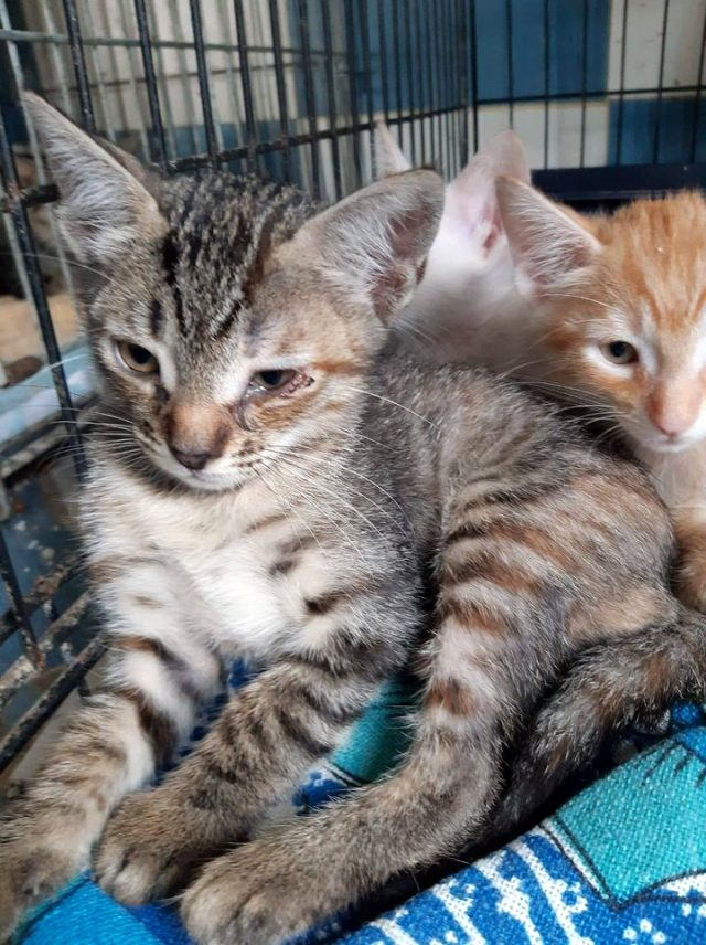 100 metrekarede 110 kediyle yaşıyordu! Evden tahliye edilen kiracı kedileriyle ortada kaldı
