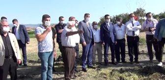 Recep Çıplak: Osmancık'ta çeltik hasadı sürüyor