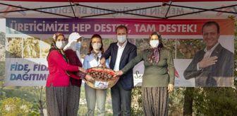 Toroslar: Başkan Seçer, nergis soğanı dağıtımına Darısekisi'nden başladı