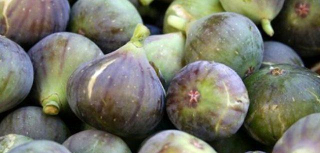Türkiye incir ihracatından 2 ayda 39 milyon dolar kazandı