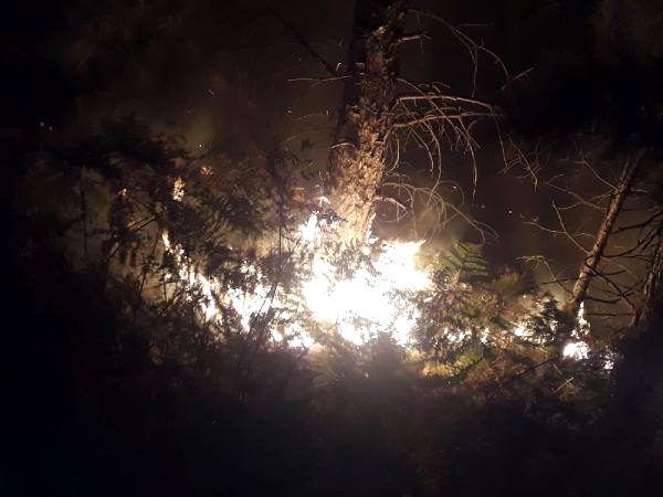Son dakika... Bergama'da orman yangını (3)