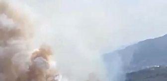Mudanya: Son dakika haber! Bursa'da orman yangını