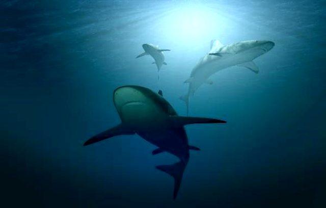 ABD'den korkutan aşısı açıklaması: Bir doz aşı için 250 bin köpekbalığı katlediliyor