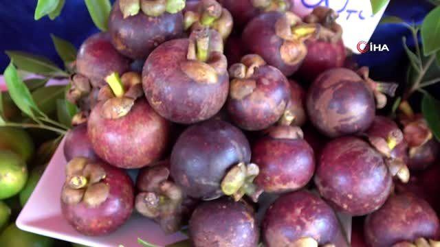 Alanya'da yetişen tropik meyveler 350 liraya varan fiyatlarıyla dudak uçuklatıyor