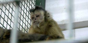 Faruk Yalçın: Hayvanat bahçesinden firar eden maymun elektrik akımına kapılarak yaralandı