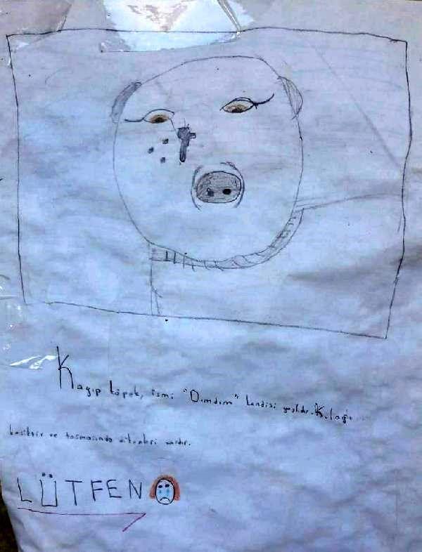 Çocuklar, kayıp köpekleri 'Dımdım'ı resmini çizdikleri el ilanıyla arıyor