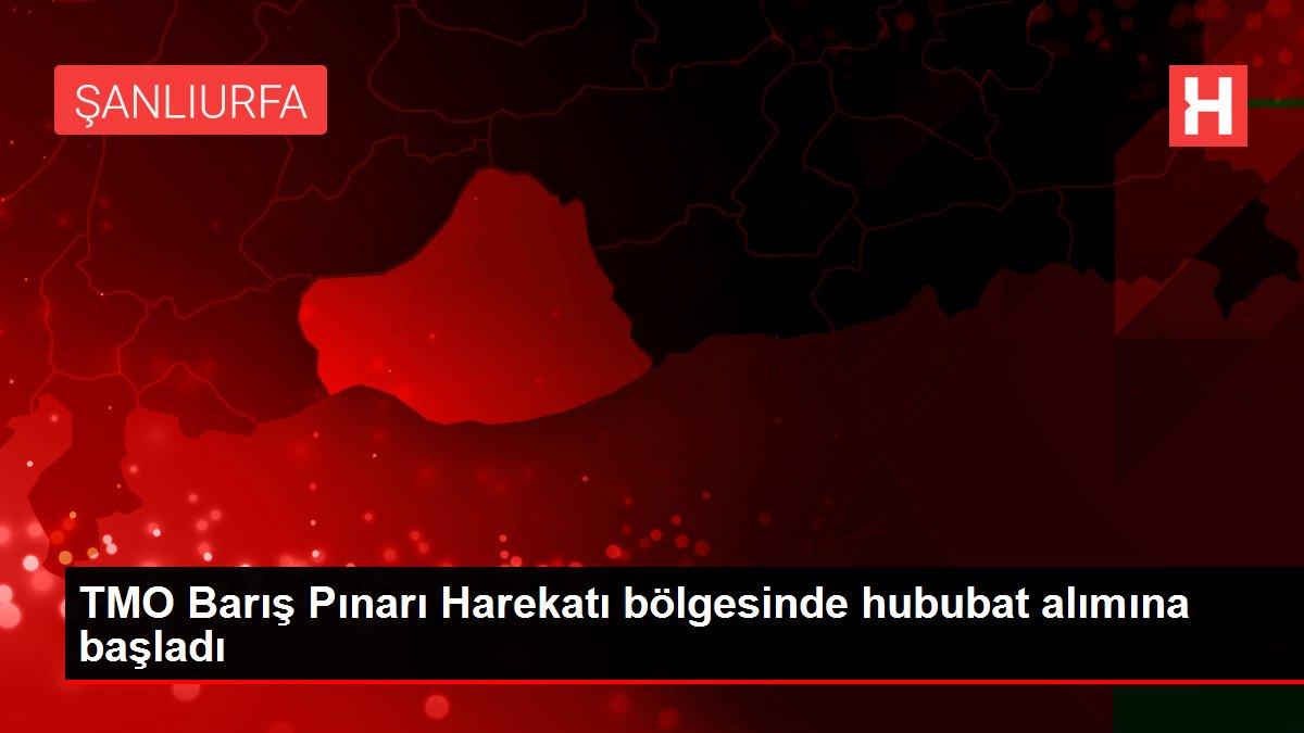 TMO Barış Pınarı Harekatı bölgesinde hububat alımına başladı