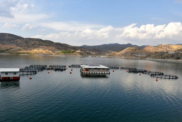 Denizi olmayan Malatya'dan 11 ülkeye balık ihracatı yapılıyor