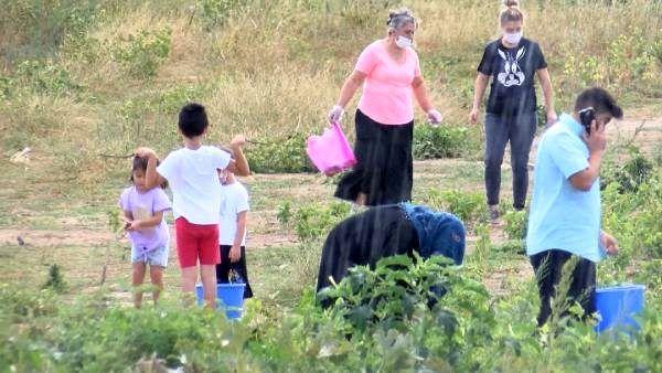 İstanbul'da taze ve organik ürün için tarlalara akın
