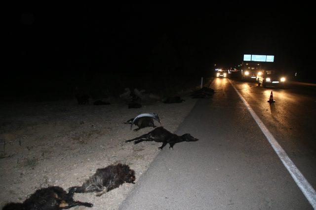 İki otomobil sürüye çarptı! 23 küçükbaş hayvan telef oldu