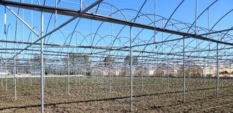 Doğu Karadeniz Projesi: Sağlam: 'Çarşamba'da sera köyü kurulabilir'
