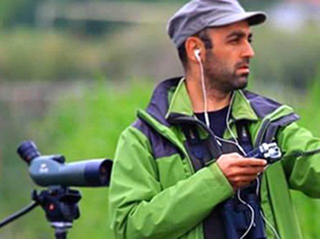 İstanbul'da görülen yeşil papağan istilası, kent faunasını bozabilir