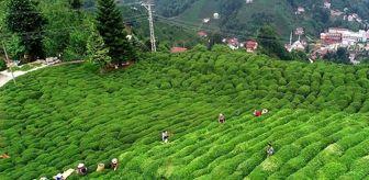 Mauritius: Türkiye çay ihracatından 9 ayda 12 milyon dolar kazandı
