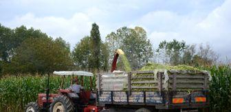 Sinop: Sinoplu çiftçiler silaj yapımına başladı