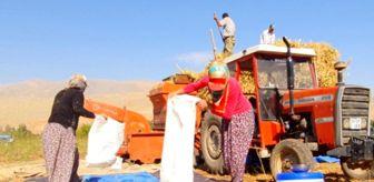 Doğanşehir: Fasulyede hasad dönemi