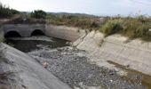 Aydın'da, sulama kanalında çok sayıda 'ölü balık' bulundu