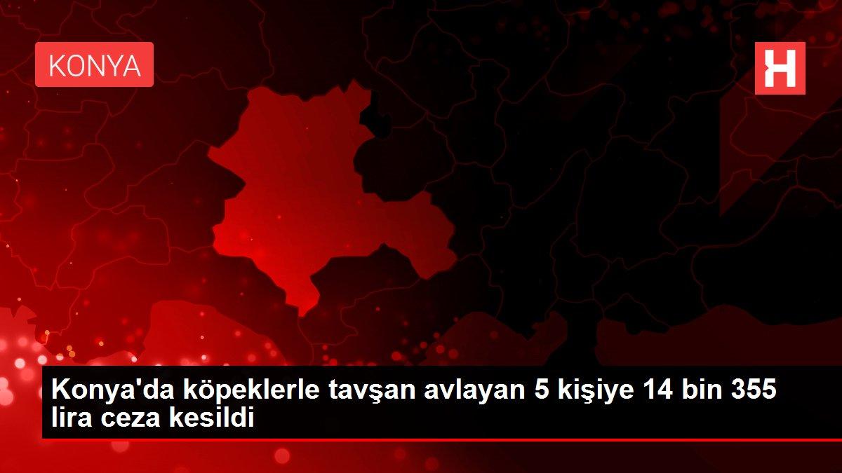 Konya'da köpeklerle tavşan avlayan 5 kişiye 14 bin 355 lira ceza kesildi