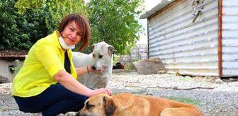 Kaza: Sokak hayvanları için hafta sonları Denizli'den, Manisa'ya geliyor