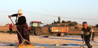 Güzelyurt: Aksaray,çerezlik kabak çekirdeği üretiminde Türkiye'de 3'üncü sırada