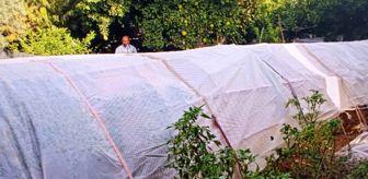 Meydan Mahallesi: Kenevir yetiştirmek için bahçesine sera kurmuş