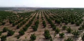 Beyşehir: Annesinin memleketine kurduğu ceviz bahçeleriyle tarımsal üretime katkı sağlıyor