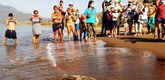 Marmaris: İztuzu sahilinde rekor yuva