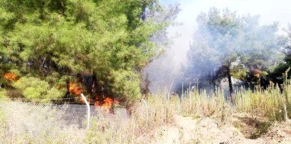 Hatay'ın İskenderun ilçesinde yine orman yangını çıktı