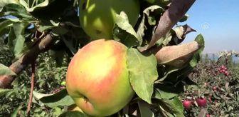 Bitlis: Meyveciliği Geliştirme Projesi'ne 4 milyon liralık destek