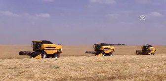 Güneydoğu Anadolu Projesi: Yerli tohumlar Ceylanpınar Tarım İşletmesinde çoğaltılıyor