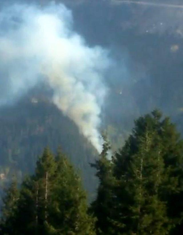 Gümüşhane Örümcek Ormanları'nda yangın! Kaymakam'dan korkutan sözler