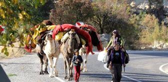 Kışlak: Yörüklerin develerle kış yurdu göçü başladı! Çoluk çocuk 25 gündür yoldalar