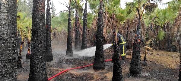 Son dakika: 30 yıllık 100 palmiye ağacı yangında küle döndü