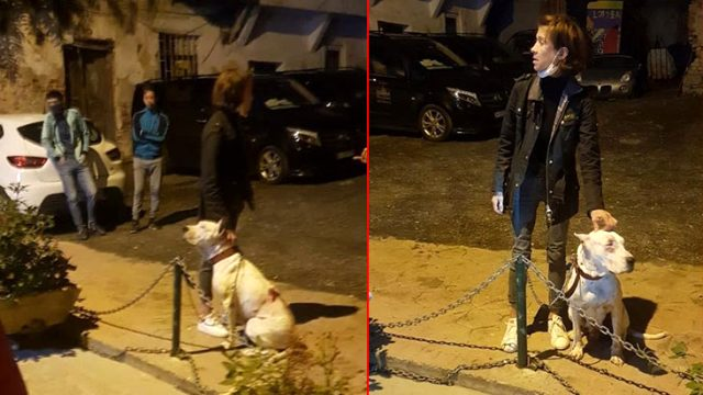 Amerikalı kadının köpeği kediyi öldürdü, mahalleli ayağa kalktı