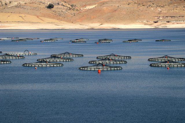 Çocukken ırmaktan tuttuğu balıkları şimdi üreterek dünyaya pazarlıyor