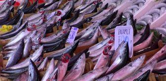 Edirne: Küçük balıkların fiyatı yarı yarıya düştü