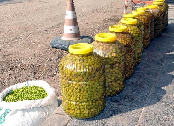 Mardin'de hasadı yapılan zeytin, zeytinyağına dönüştürülüyor