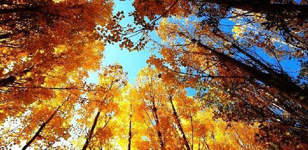 Bitlis, sonbaharda farklı renklere büründü