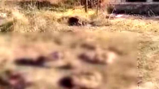 Evleri yakıp ağaçları kesen Ermeniler, bu kez de hayvanları telef etti