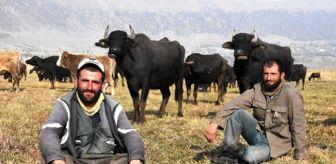 Bulut Aras: Sağır ve dilsiz kardeşler 20 yıldır çobanlık yapıyor