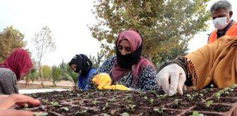 Zeynel Abidin Beyazgül: Şanlıurfa'da çiçek üretimi