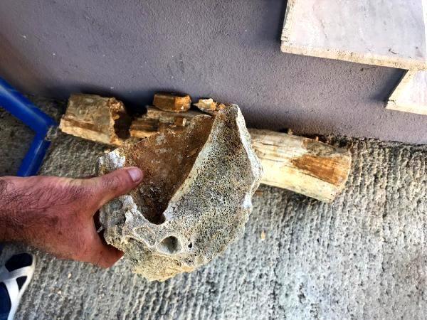 Kepçeyle kum almak isteyen köylüler, 8 milyon yıllık mamut fosilleri buldu