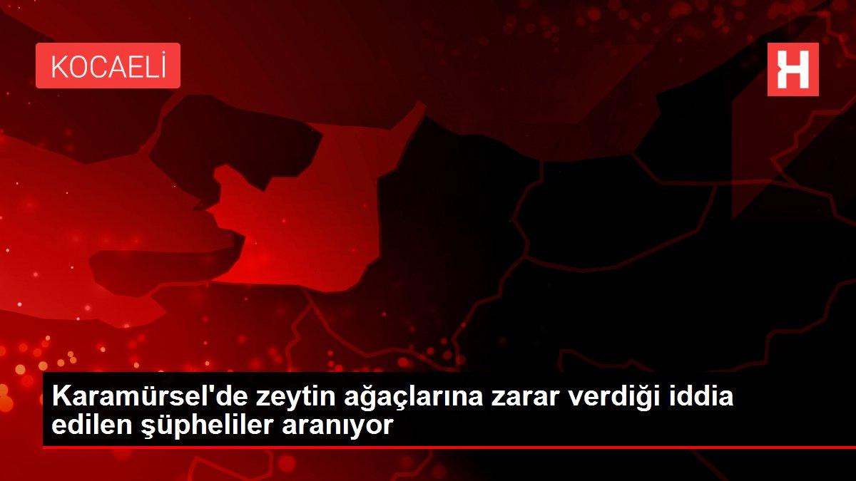 Son dakika haberi | Karamürsel'de zeytin ağaçlarına zarar verdiği iddia edilen şüpheliler aranıyor