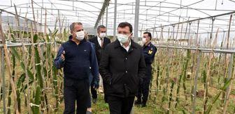 Cemal Şahin: Kaymakam Şahin, 'Efeler Diyarında Pitaya' Projesi kapsamında üreticilerle bir araya geldi